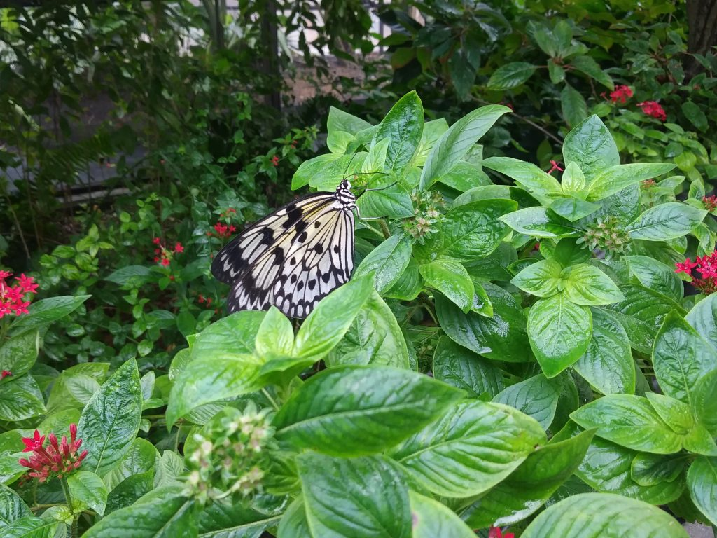 Experience Butterfly World Florida – While I am Traveling